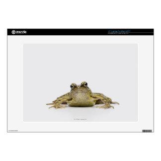 Portrait of a frog in a white studio laptop skin