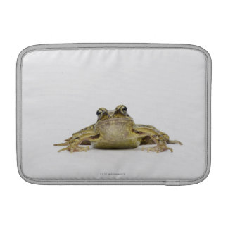 Portrait of a frog in a white studio MacBook air sleeve