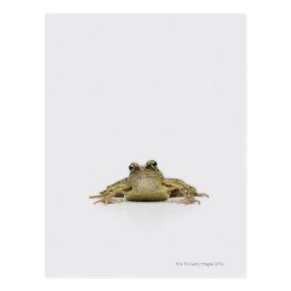 Portrait of a frog in a white studio postcard