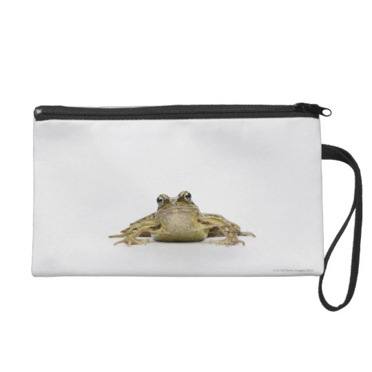 Portrait of a frog in a white studio wristlet