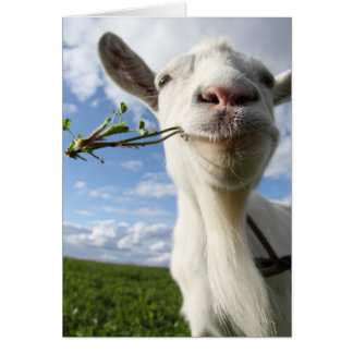 Portrait Of A Goat Eating A Grass On A Green Greeting Card