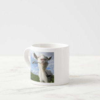 Portrait Of A Goat Eating A Grass On A Green Espresso Cup