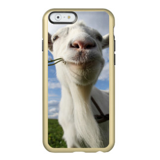 Portrait Of A Goat Eating A Grass On A Green Incipio Feather® Shine iPhone 6 Case