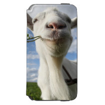 Portrait Of A Goat Eating A Grass On A Green iPhone 6/6s Wallet Case