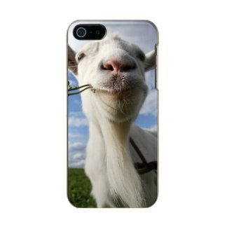 Portrait Of A Goat Eating A Grass On A Green Metallic Phone Case For iPhone SE/5/5s