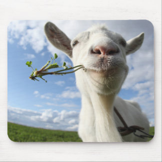 Portrait Of A Goat Eating A Grass On A Green Mouse Pad