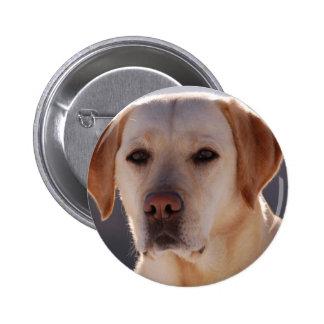 Portrait of A Golden Labrador Retriever Button