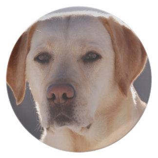 Portrait of A Golden Labrador Retriever Plates