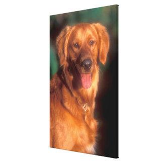 Portrait of a golden retriever canvas print