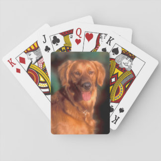 Portrait of a golden retriever playing cards
