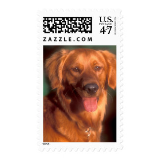 Portrait of a golden retriever postage
