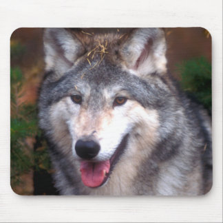 Portrait of a gray wolf mouse pad
