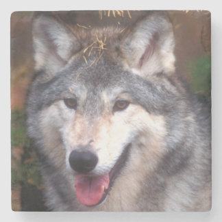 Portrait of a gray wolf stone coaster