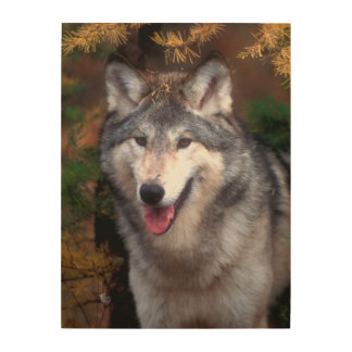 Portrait of a gray wolf wood wall decor
