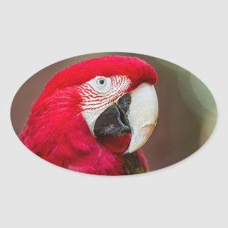 Portrait of a Green-winged Macaw Oval Sticker