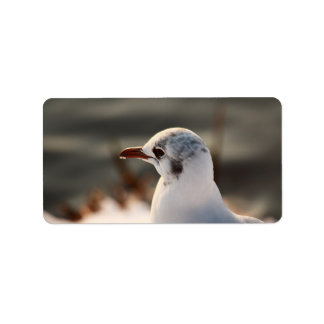 portrait of a gull label