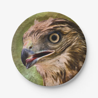 Portrait of a Hawk Paper Plate