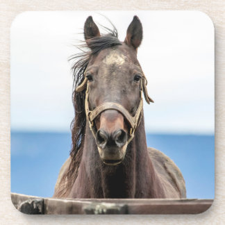 Portrait of a horse coaster