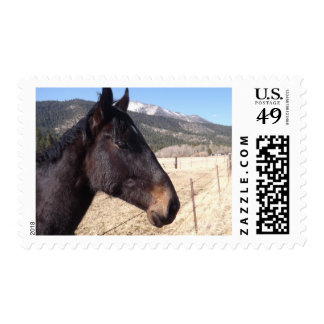 Portrait Of A Horse Postage Stamps