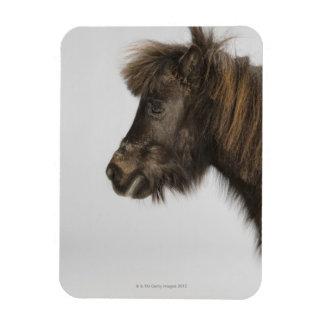 portrait of a horse flexible magnets