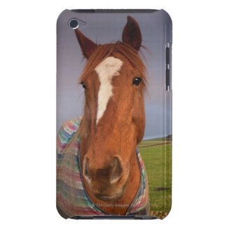 Portrait Of A Horse With A Rainbow In The Sky Barely There iPod Cover