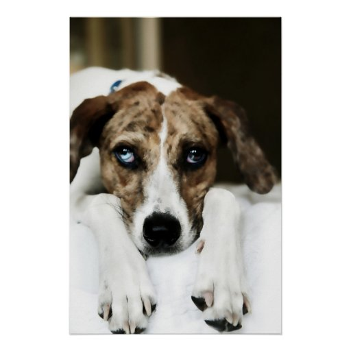 Portrait of a Hound-Mix Dog Poster