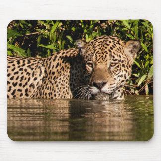 Portrait of a Jaguar Swimming Mouse Pad