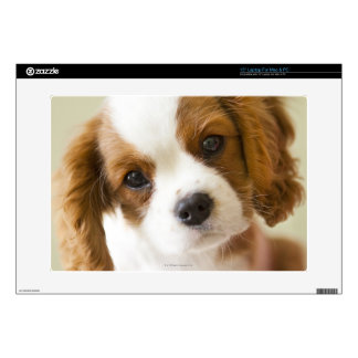 "Portrait of a King Charles Spaniel puppy 15"" Laptop Skins"