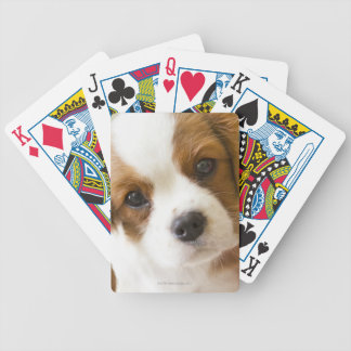 Portrait of a King Charles Spaniel puppy Bicycle Playing Cards