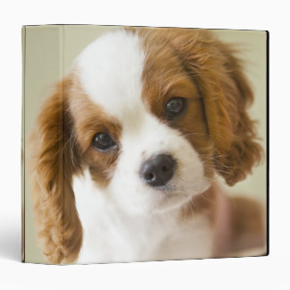 Portrait of a King Charles Spaniel puppy Binder