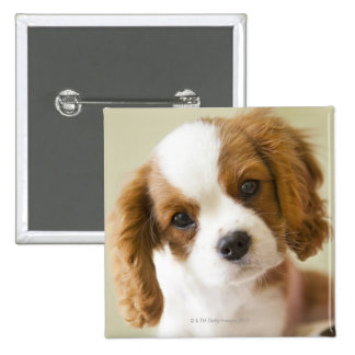 Portrait of a King Charles Spaniel puppy Button