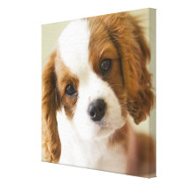 Portrait of a King Charles Spaniel puppy Canvas Print