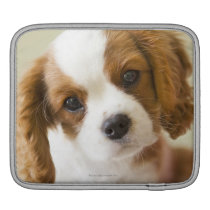 Portrait of a King Charles Spaniel puppy iPad Sleeve