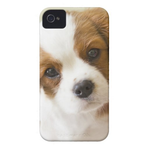 Portrait of a King Charles Spaniel puppy. iPhone 4 Case