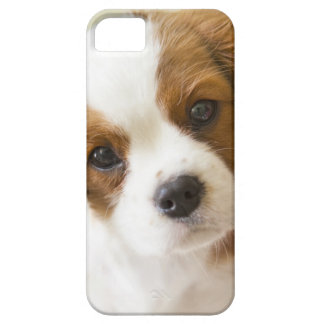 Portrait of a King Charles Spaniel puppy. iPhone SE/5/5s Case
