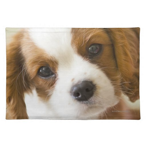 Portrait of a King Charles Spaniel puppy Cloth Placemat