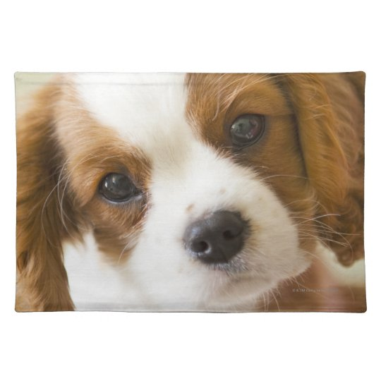 Portrait of a King Charles Spaniel puppy Placemat