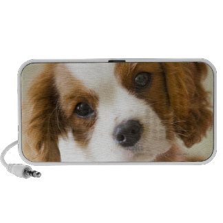 Portrait of a King Charles Spaniel puppy Speaker