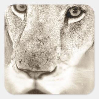 Portrait of a Lion Square Sticker