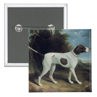 Portrait of a liver and white pointer 2 inch square button