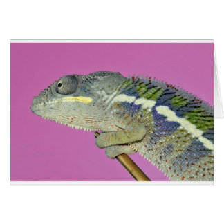 portrait of a male panther chameleon card