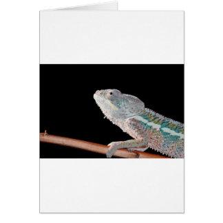 portrait of a male panther chameleon (furcifer par card