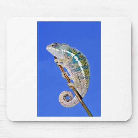 portrait of a male panther chameleon mouse pad