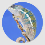 portrait of a male panther chameleon classic round sticker