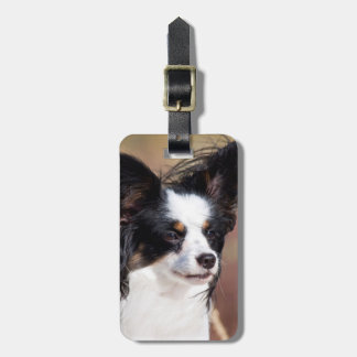 Portrait Of A Papillon Sitting In The Wind Bag Tag