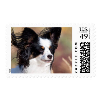 Portrait Of A Papillon Sitting In The Wind Postage