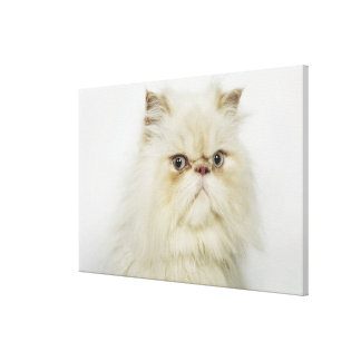 Portrait of a Persian cat Gallery Wrapped Canvas