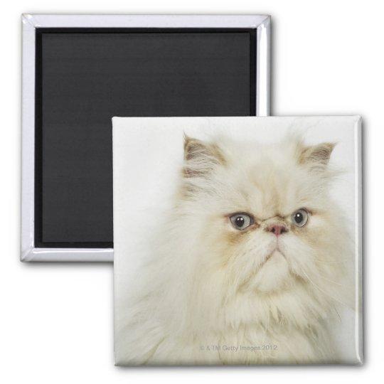 Portrait of a Persian cat Magnet