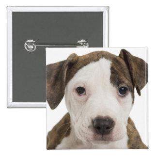 Portrait of a pitbull puppy pinback button