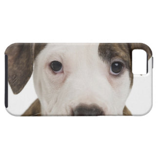 Portrait of a pitbull puppy iPhone 5 covers